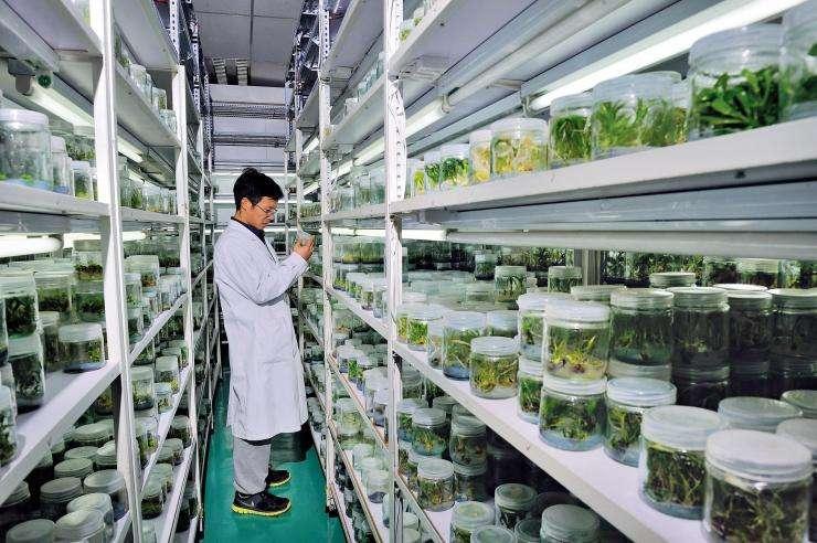 种子实验室密集货架
